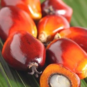 RPSO palm oil